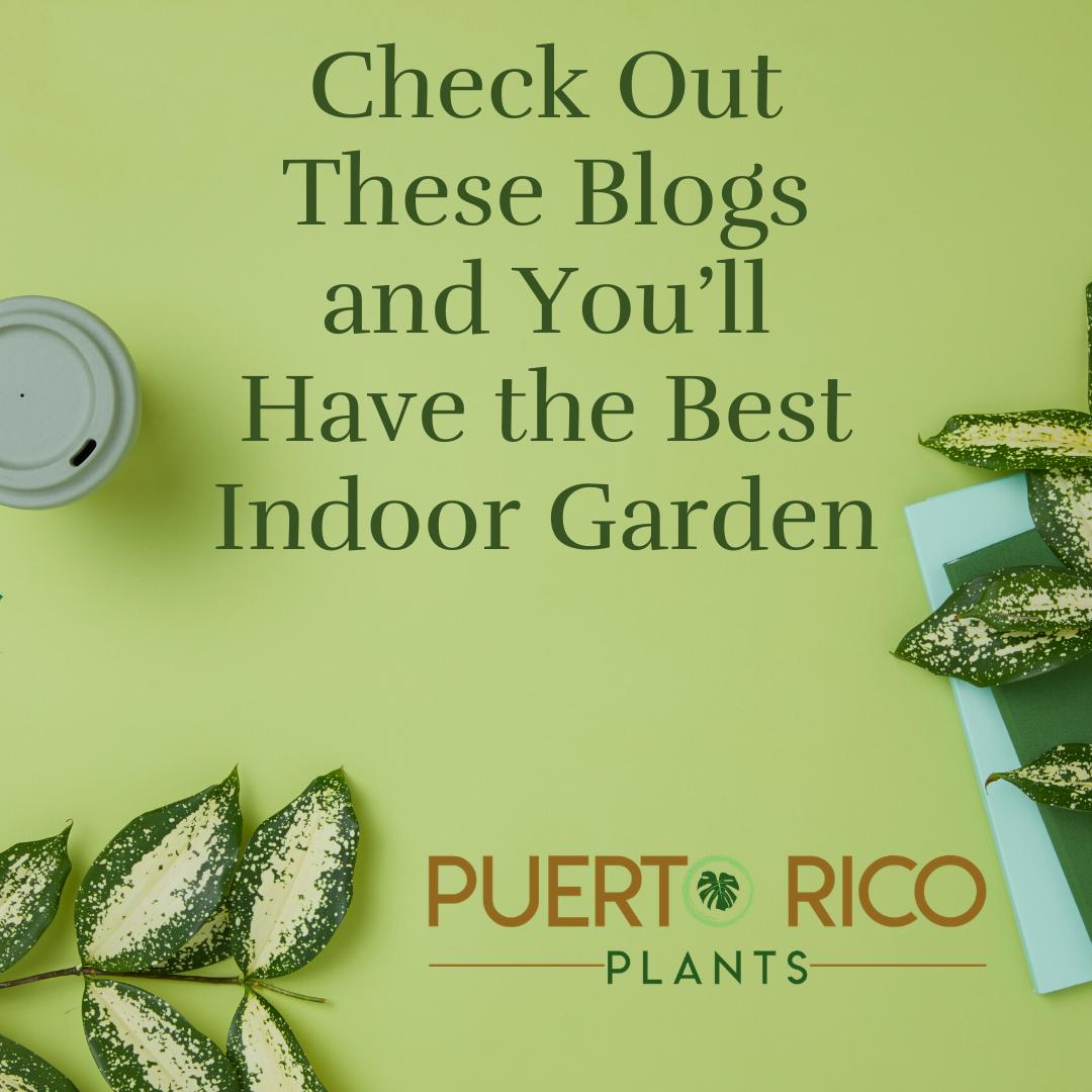 PuertoRico Plants