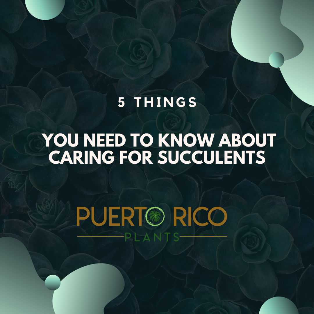 Puerto Rico Plants