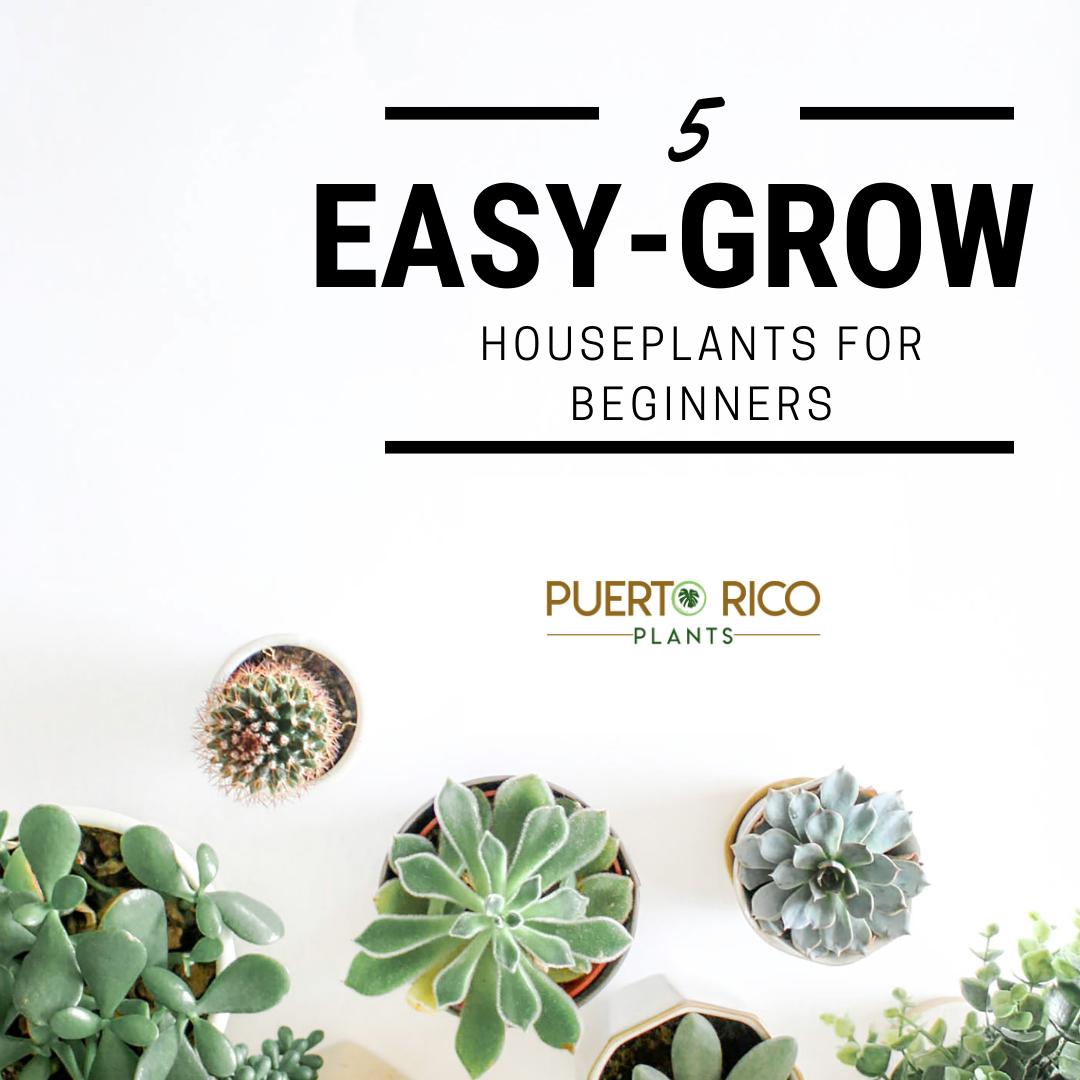 Easy-Grow Houseplants