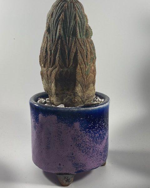 Euphorbia Obesa + Planter Combo